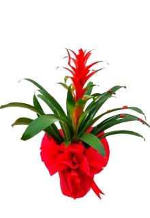 Bodrum Marina çiçek Siparişi Bodrum Marina çiçekçilik çiçek Siparişi