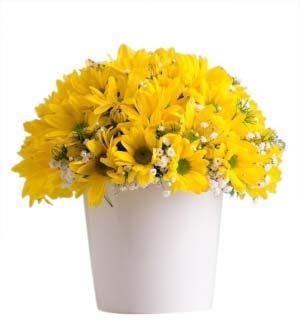 Sarı Papatyam