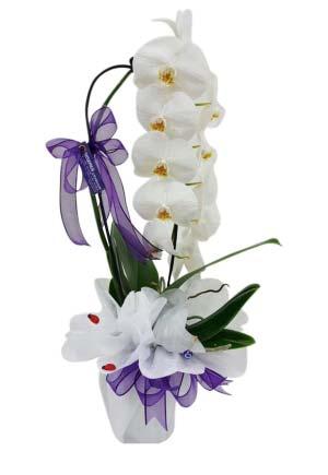 Beyaz Orkide Tek Dallı